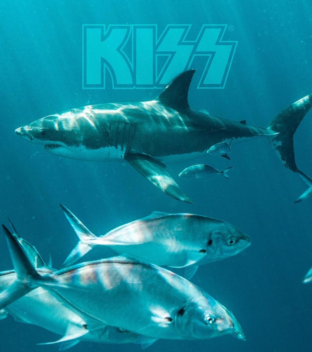 kiss tiburón